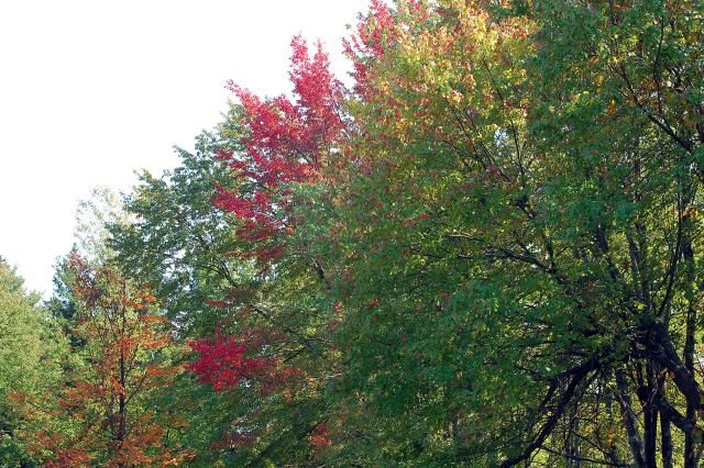 When does fall begin? The first day of fall is the September autumnal equinox, when day and night hours are equal. Here are dates for 2016 - 2020.