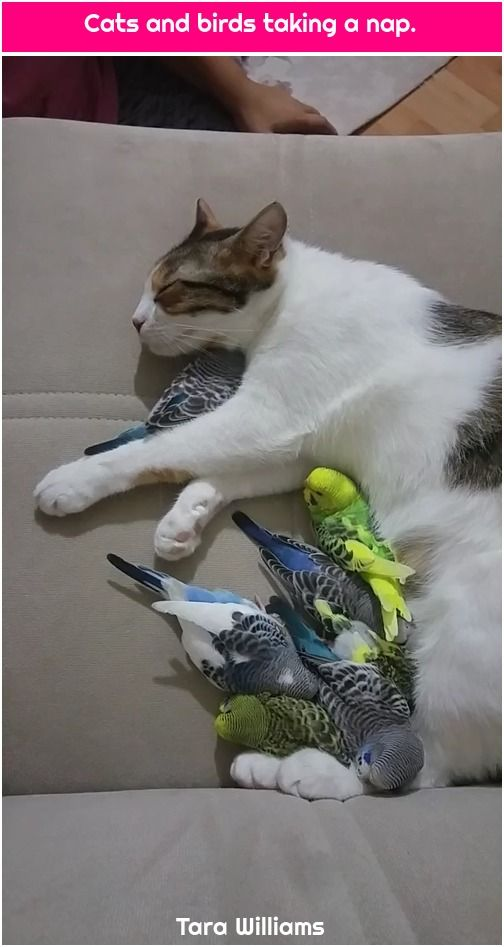 1. Cats and birds taking a nap. Cats and birds taking a nap.  , #Birds, #Cats, #Nap