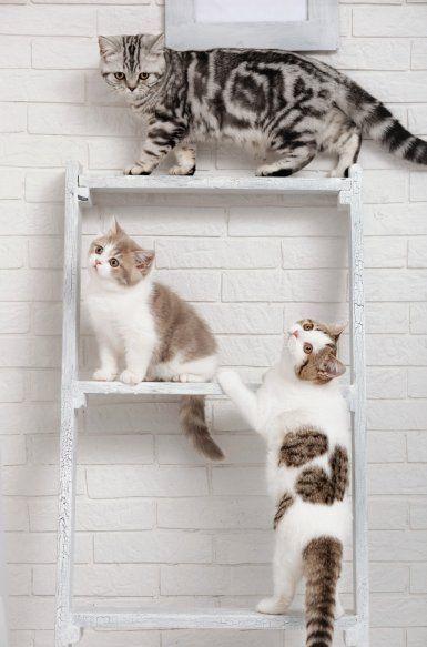 die besten 25 katzen kletterwand ideen auf pinterest kratzbaum klein diy kratzbaum und von. Black Bedroom Furniture Sets. Home Design Ideas