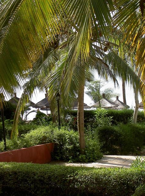 Kenya by Flygstolen, via Flickr #Kenya #Africa #Afrika #Travel #Adventure #Resa #Äventyr #Resmål#semester #holiday #vacation #semester #palm