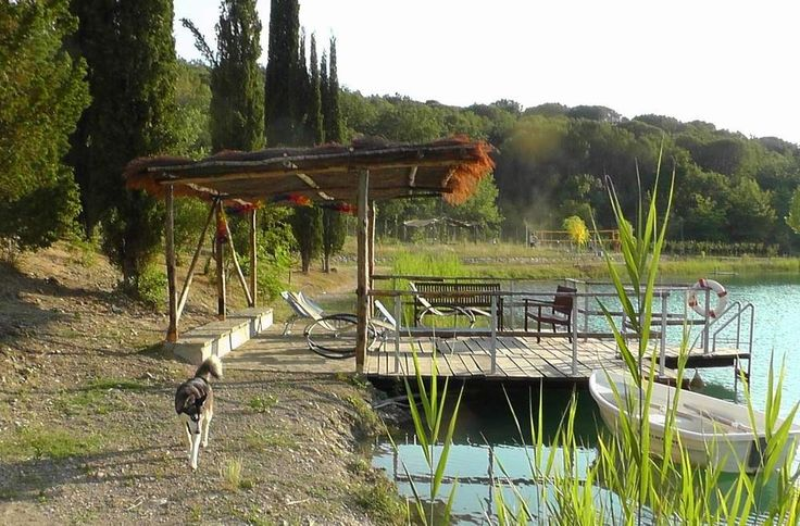 Un lupo solitario . . eheh  #animali #lago #cane #animals #passeggiata #bau #carezze