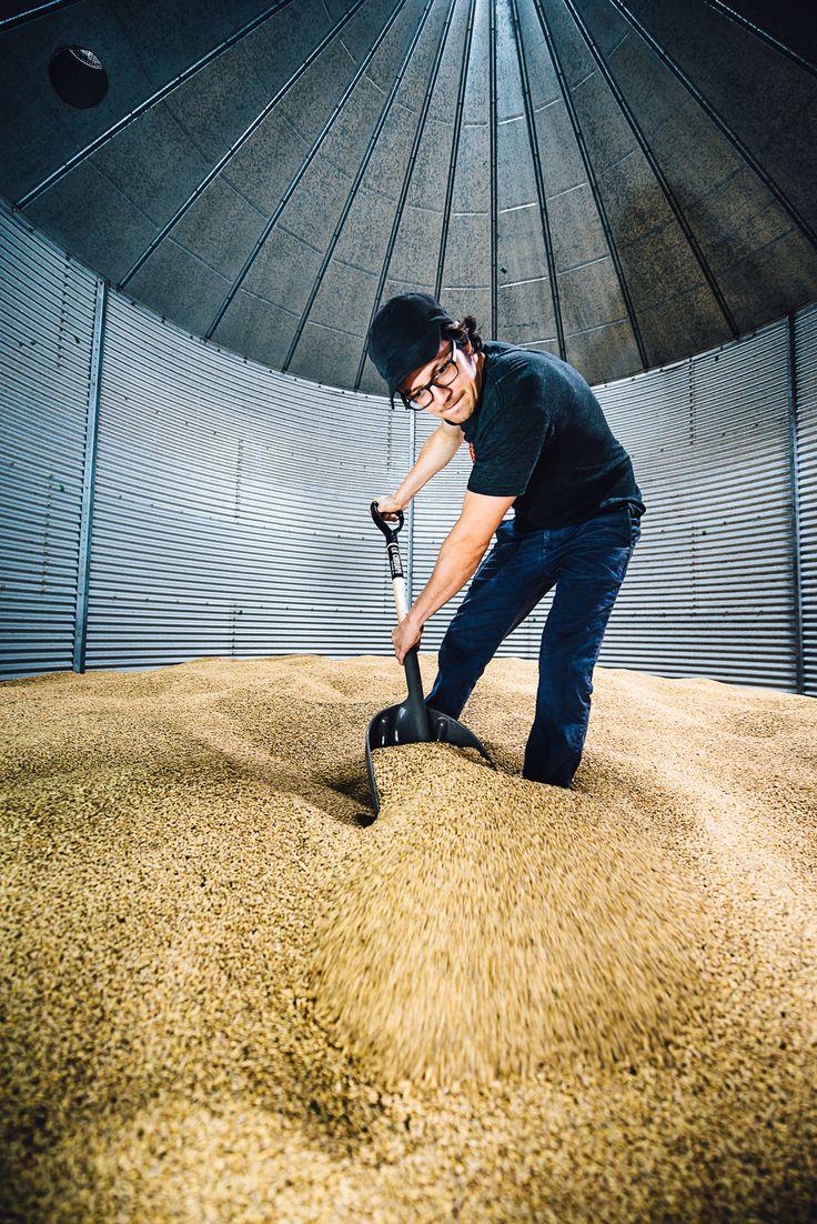 Entreposage des grains d'orge dans les silos à la Microbrasserie La Chouape