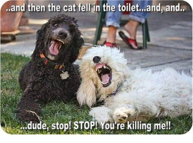 Joke Time: Laughing, Cat, Funny Dogs, Dogs Jokes, Funny Stuff, Dogs Humor, Funnies, Things, Funny Animal