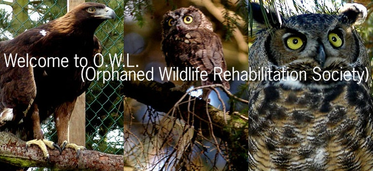 The Orphaned Wildlife Rehabilitation Society is a non-profit organization whose volunteers are dedicated to public education and the rehabilitation and release of injured and orphaned birds.