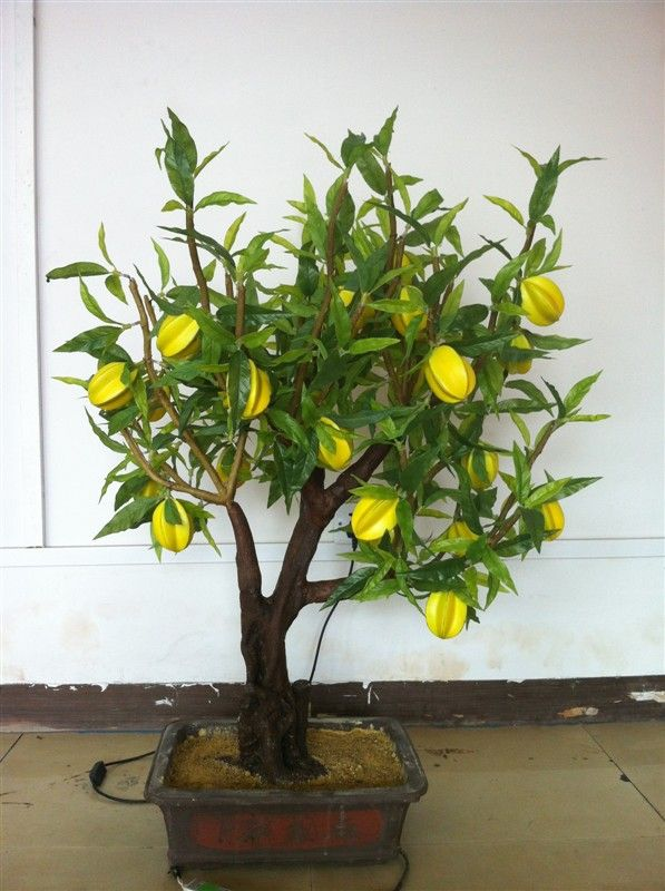 bonsai árvore de frutas