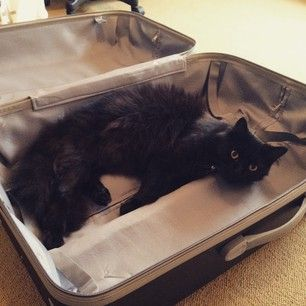 When you're packing for a trip, and they know something's up. | 21 Moments Of Cuteness Only Cat Owners Can Truly Appreciate