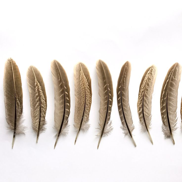 ✨ Male pheasant wing feathers now in stock ✨