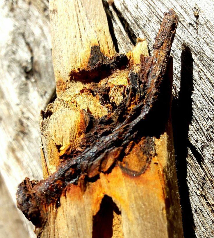 #Rust natural tones