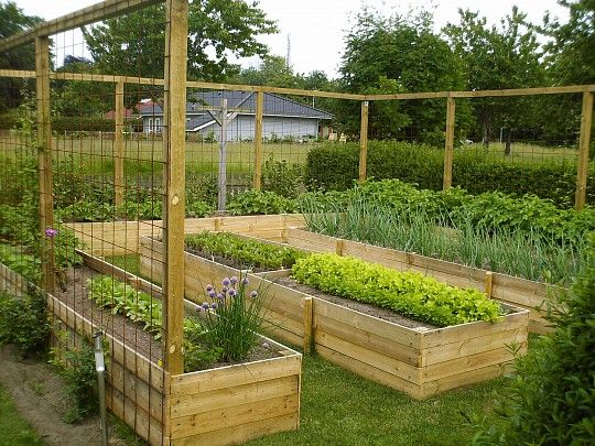Køkkenhave indhegnet med stolper og net, hvor der kan vokse levende, grønt hegn.