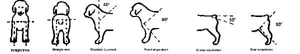 Volhard Puppy Aptitude Test