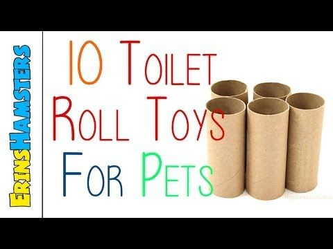 10 TOILET ROLL TOYS FOR PETS - YouTube