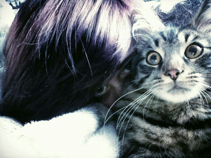 My new/first kitty »^¥^« his name is chase and he is super cute and funny
