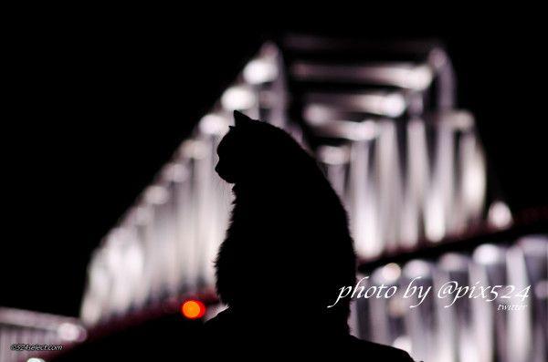 今日は東京ゲートブリッジを見に来たニャン… #maps524