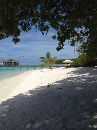 Paradise.....Sun Island Resort Maldives