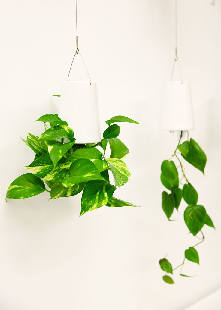 8 Plants for Your Office Life x The Sill — theory of place