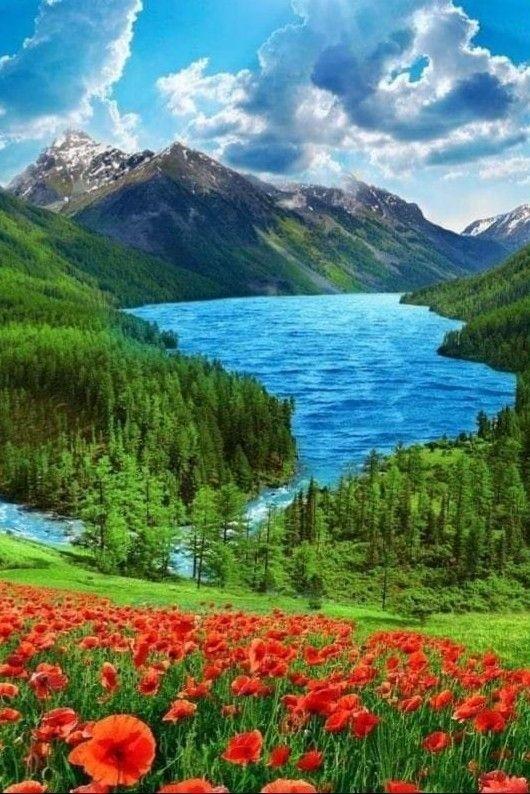Картинка картинки природы