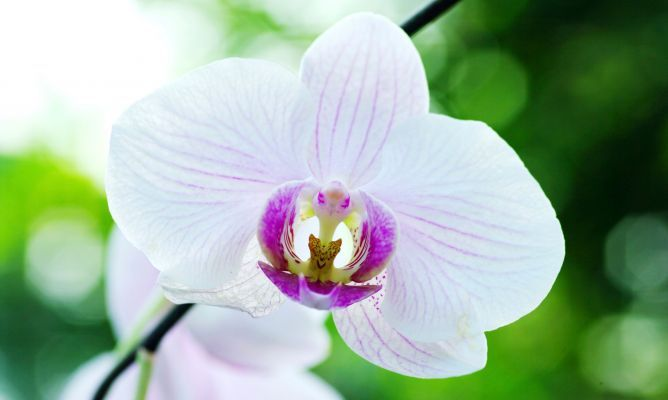 Cuidados básicos de las orquídeas