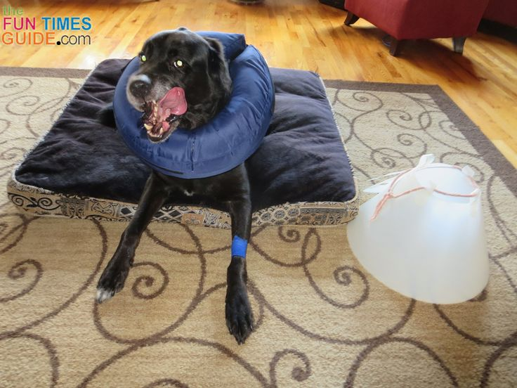 A better e-collar for dogs - try an inflatable dog collar. Worked great for us!