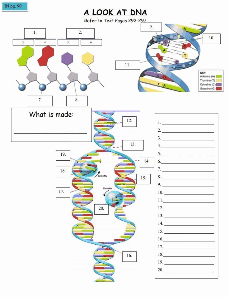 11++ Protein synthesis race worksheet answers Info