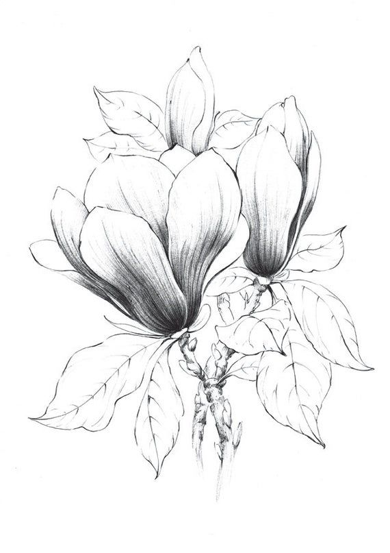Set 2 Flower Prints Peony Sketch Clipart Magnolia Botanical Art Louisiana Flower Line Drawing Gift For Her Black White Botanical Art Drawings Art