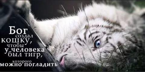 цитаты о самоуважении: 22 тыс изображений найдено в Яндекс.Картинках