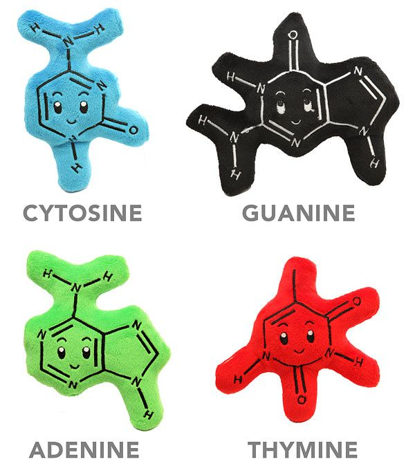 Cute and huggable DNA bases :-)  They even form hydrogen bonds with magnets.  Definitely a must have for all those who love DNA!!