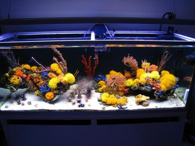 Reef Aquascaping, why hasn't the movement really caught on yet? - Reef Builders | The Reef and Marine Aquarium Blog