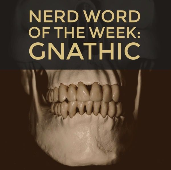 """Nerd Word of the Week: Gnathic ~ having to do with the jaws. As in: Everything we know about that particular branch of the genus """"homo"""" was deduced from a single gnathic fossil."""