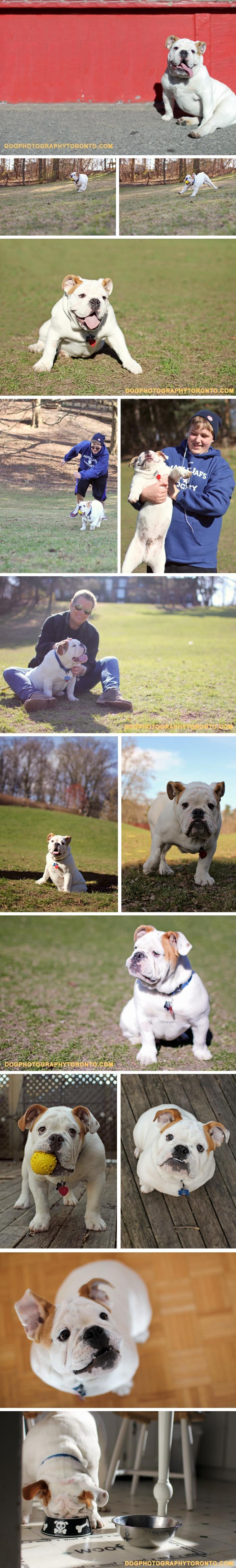Brady boy ... what a cutie!: Super, Brady Boy, Animals, Boys, Pictures, Box, Blog