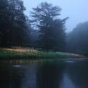 Puntos LED iluminan los Jardines de Longwood / Bruce Munro (24)