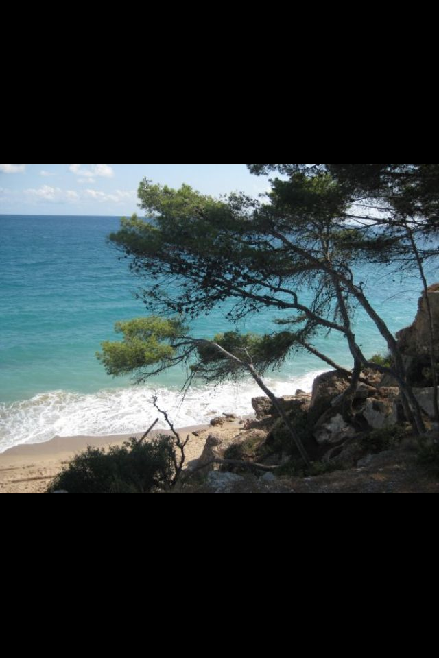 Tree on the beach, Miami Platja, Spain.