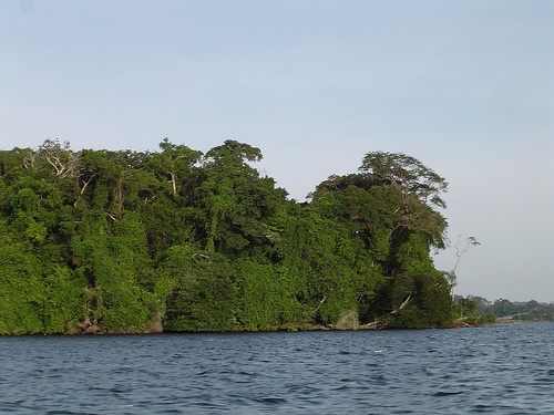 Jungle meets the sea in Gabon
