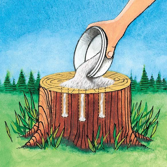 Tree Stump Remover ~ Get rid of tree stumps by drilling holes in the stump and filling them with 100% Epsom salt. Follow with water, and wait. Live stumps may take as long as a month to die and start to decompose all by themselves. (epsom salt: bitterzout of magnesiumsulfaat; van drogist of online zeepwinkels)