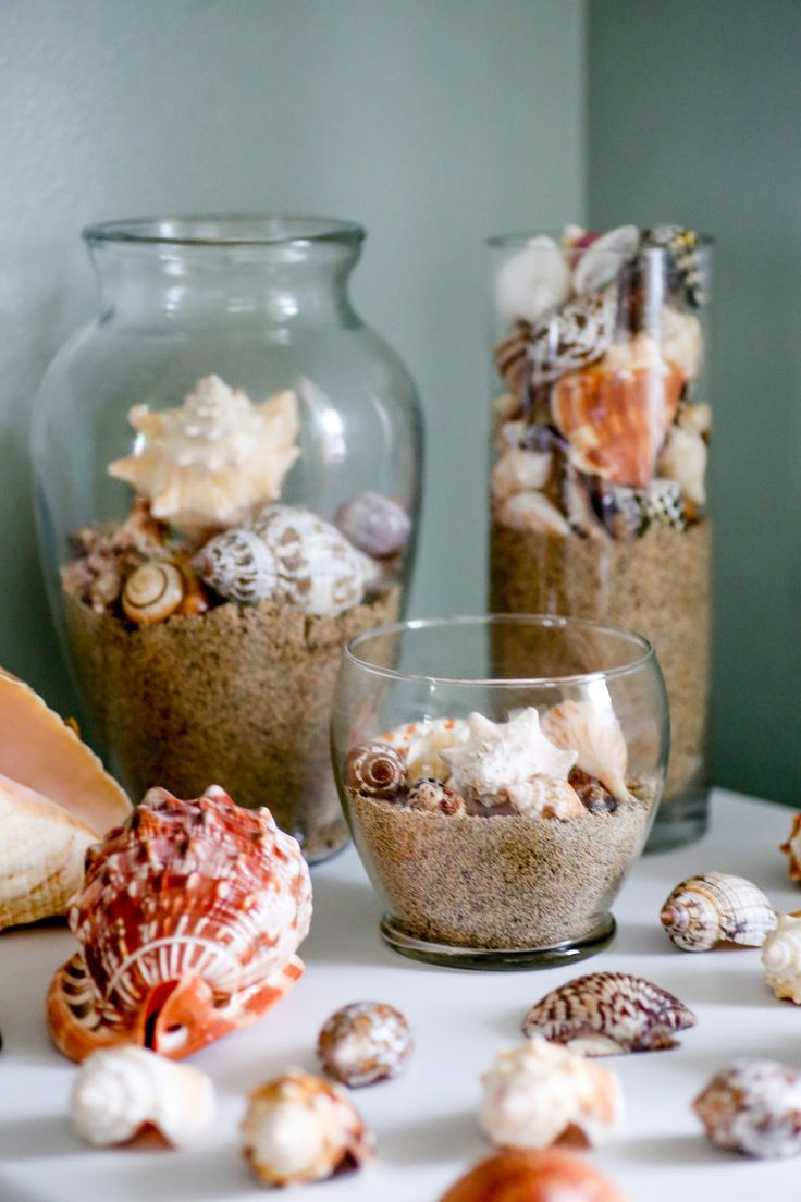how to clean sea shells …