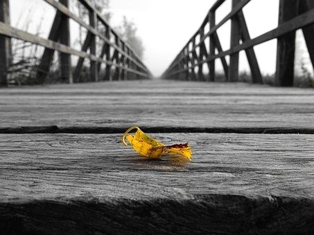 A olor splash of a fallen leaf on a rickety old bridge  #greyscale #bnw_just #doublexposure_bnw #7bnwcreation_1day #fotofanatics_bnw_ #ig_shotz_bw #icapture_bnw #createcaptura_bnw #9vaga_bnw9 #bnw_kings #best_expression_bnw #ig_contrast_bnw #loves_bnw #my_daily_bnw #bnw_sweden #bnw_of_our_world #total_bnw #top_bnw #bnw_lombardia #pocket_bnw #bnw_greatshots #ok_bnw #bnw_life_shots