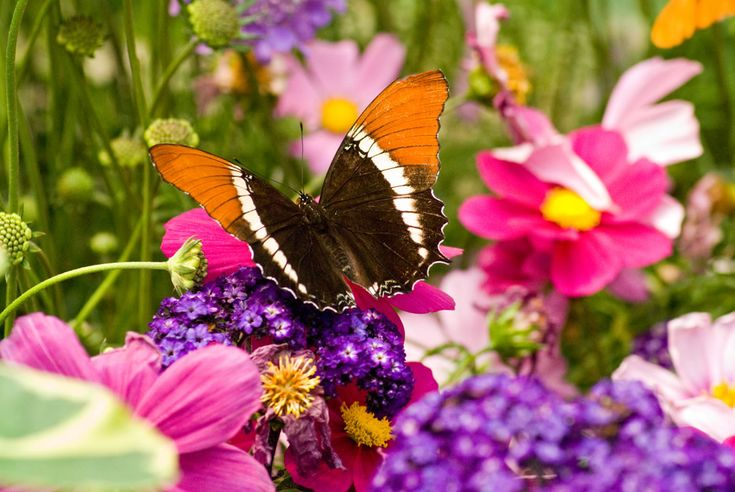 25+ Best Ideas About Butterfly Pictures On Pinterest