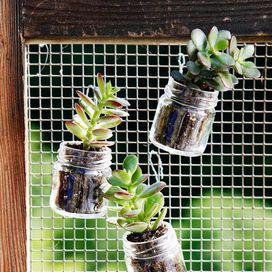 Non buttate i vasetti di vetro ma usateli per metterci le talee, bellissime piante grasse!I vasetti si possono appendere anche con del fil di ferro un po