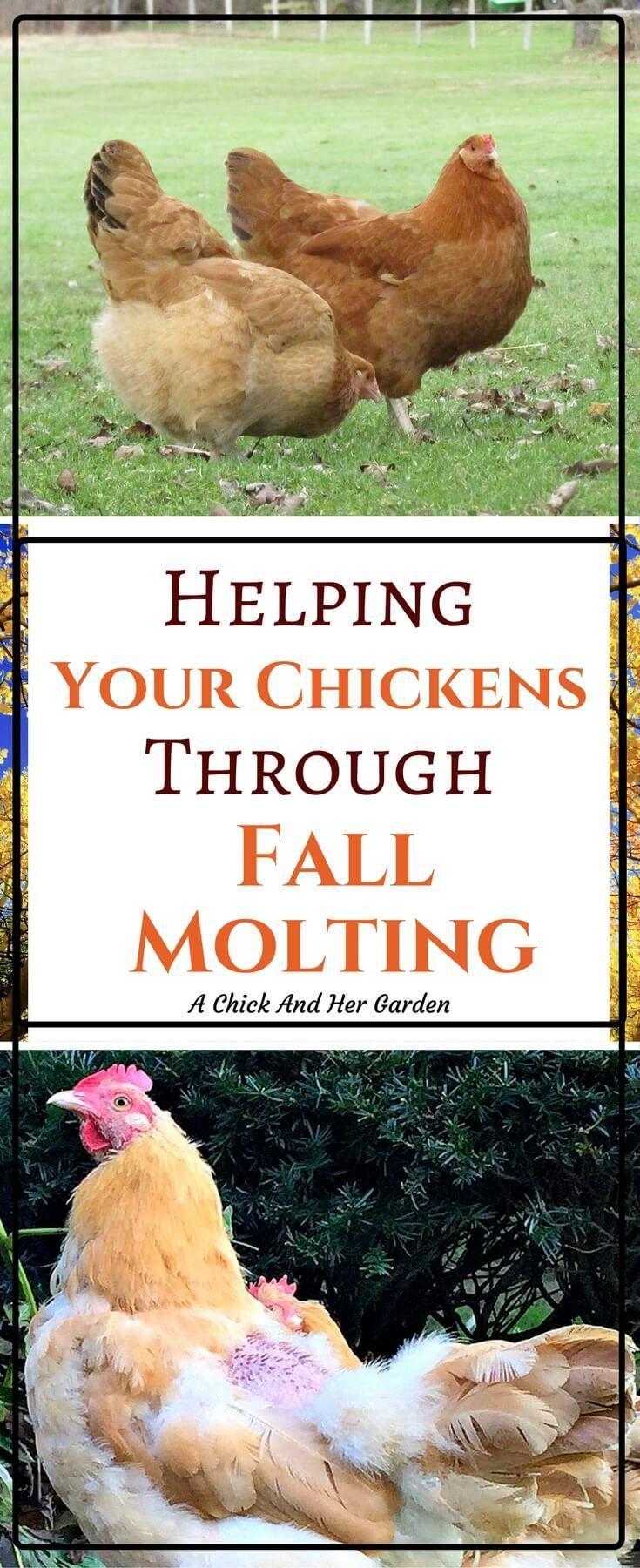 48 best fodder images on pinterest chicken coops chicken feed