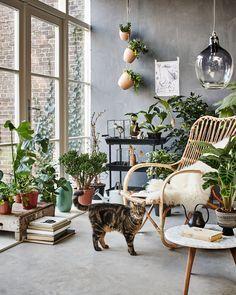 botanic living room / orangery with a rotan chair, plants, flowers and a cat | Styling Fietje Bruijn, Marianne Luning, Frans Uyterlinde | vtwonen june 2015 | #vtwonenshop