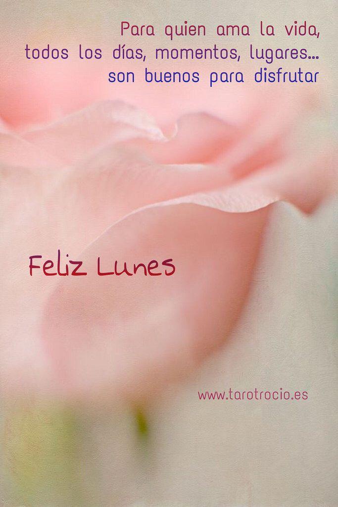Felizlunes Lunes Feliz Lunes Frases Feliz Lunes Amor Saludos
