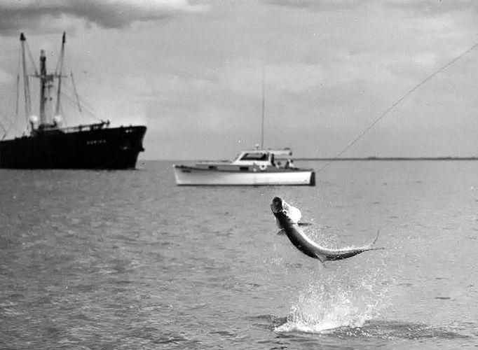 10 best images about boca grande tarpon fishing on for Boca grande tarpon fishing