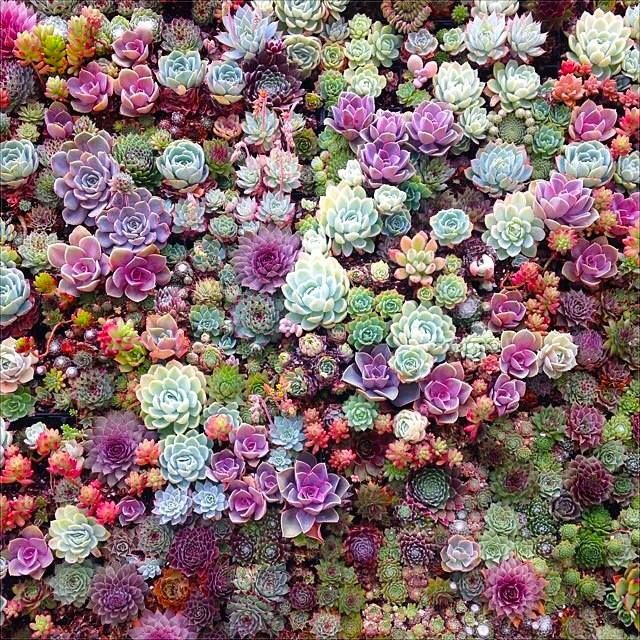Colorful succulent gardens