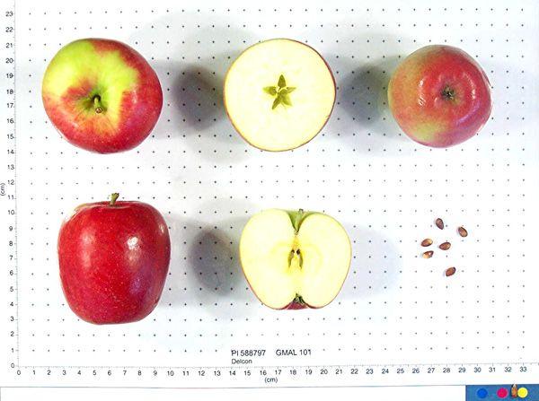 206 Best Malus Images On Pinterest Plants Crab Apples