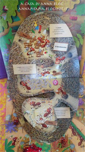 Il formicaio, formiche, balie, operaie, regina, afidi, Jitka Petřeková, Tomáš Tůma, Editoriale Scienza, scienza, insetti, insetti sociali, A casa di Anna, annapisapia.blogspot.it