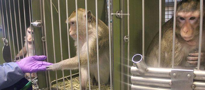 Stoppt Experimente an Primaten!