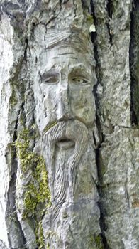 Face carving at Ferry Island in Terrace, British Columbia, Canada. There are said to be over 50 'Spirits of the Forest' carvings on trees. The faces were made by Rick Goyette. - photo by WalterandSara