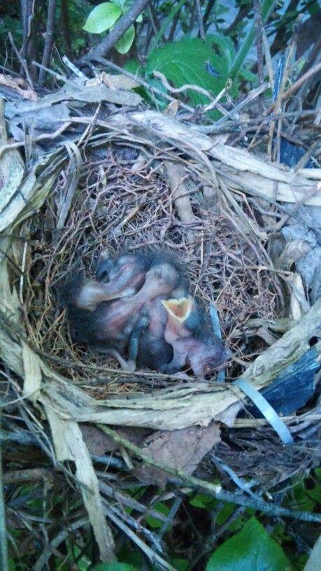 un nido en mi jardin