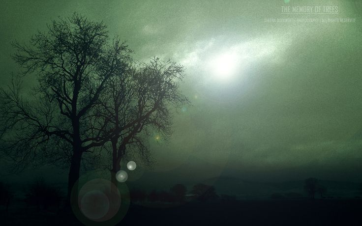 Scenery, Landscape, Trees, Light, Silhouettes, Mood, Moody, Atmosphere, Scenic, Dreamy, Sheena Duckworth Photography