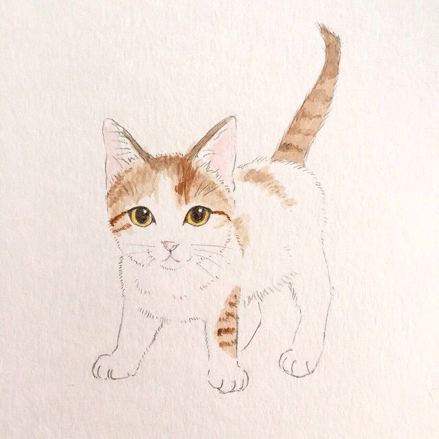 Takako Ide cat