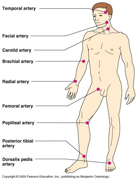 pulse deficit | temporal artery, facial, common carotid, brachial, radial, femoral ...